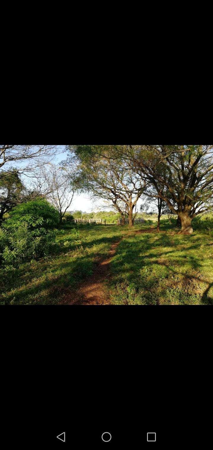 27 hectáreas en Artigas Itapúa - 2
