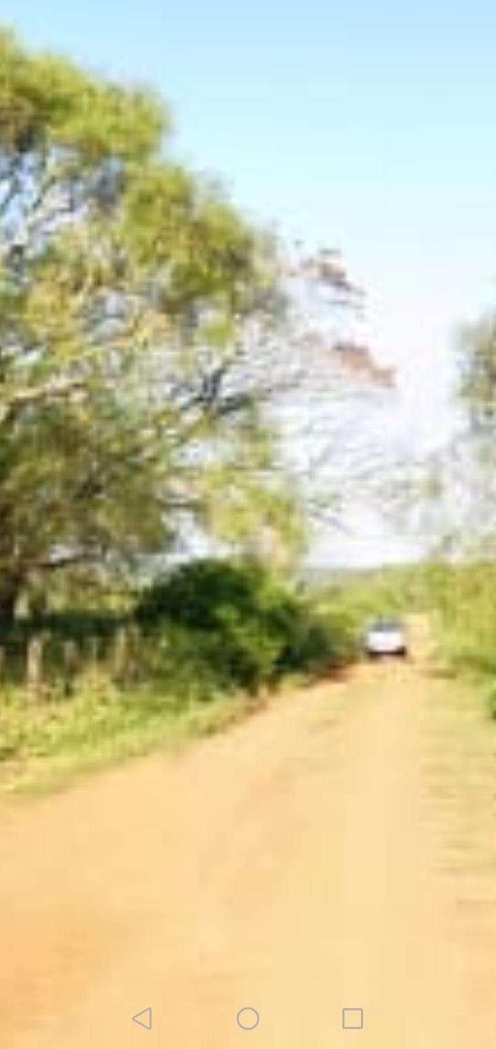 27 hectáreas en Artigas Itapúa - 6