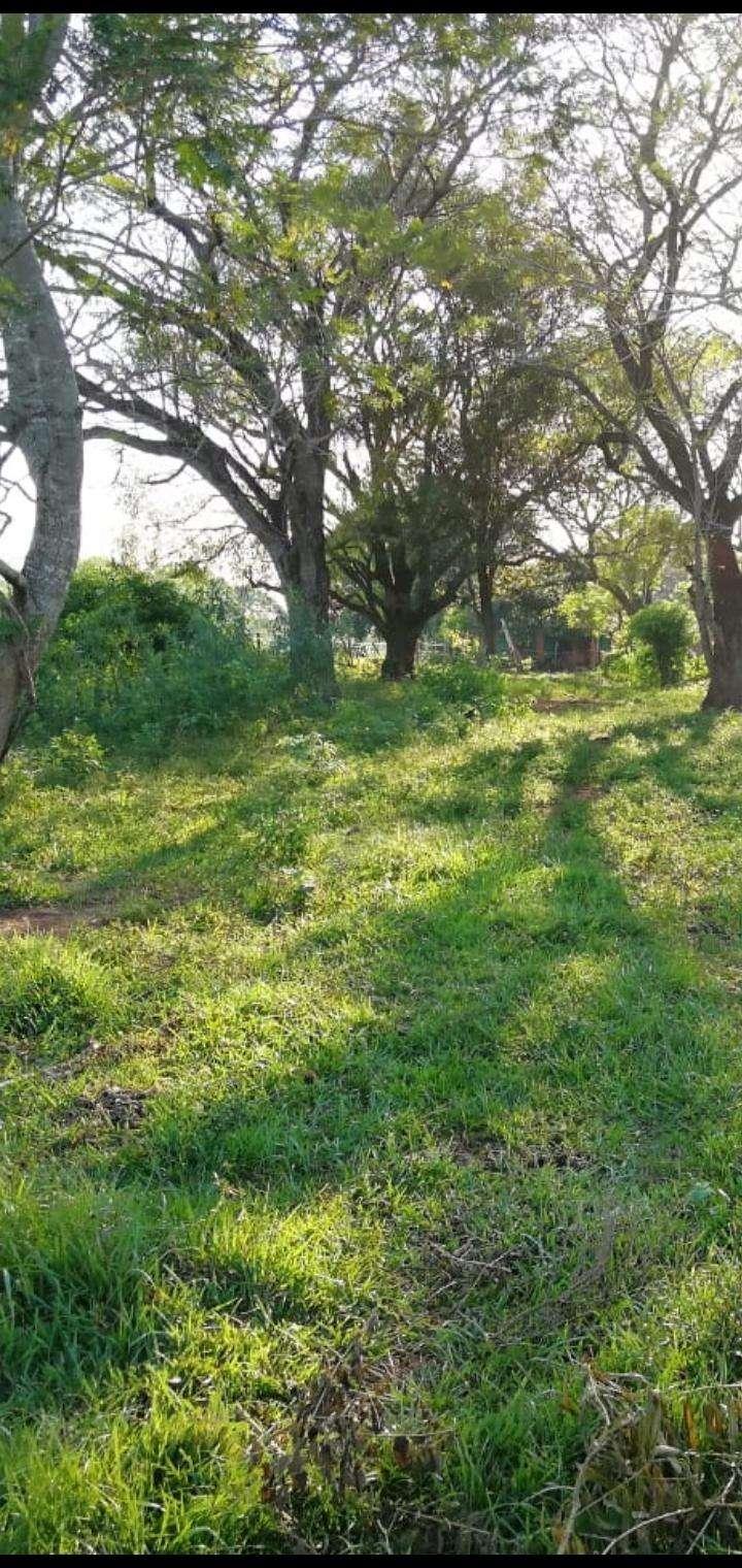 27 hectáreas en Artigas Itapúa - 7
