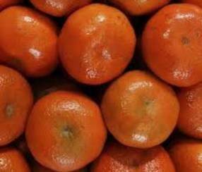 Mandarina mocota