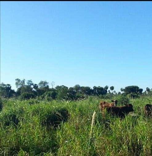 2700 hectáreas en Chaco - 3