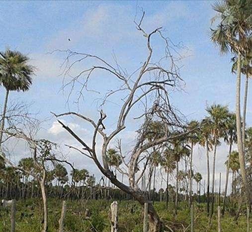 2700 hectáreas en Chaco - 6