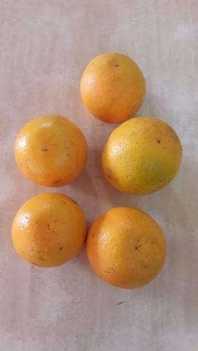 Naranja híbrida