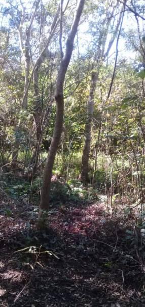 7 hectáreas y media en Ybytymi Paraguarí
