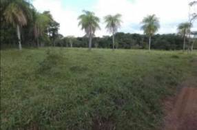 54 hectáreas con granja en Tobatí