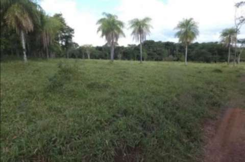54 hectáreas con granja en Tobatí - 0