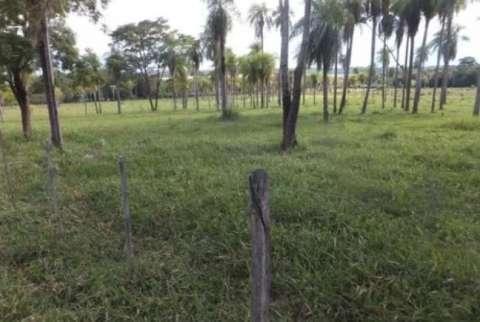 54 hectáreas con granja en Tobatí - 1