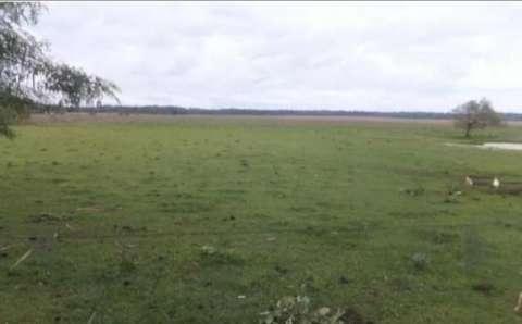 54 hectáreas con granja en Tobatí - 3