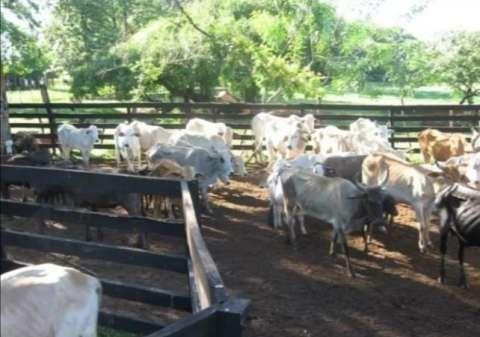54 hectáreas con granja en Tobatí - 5