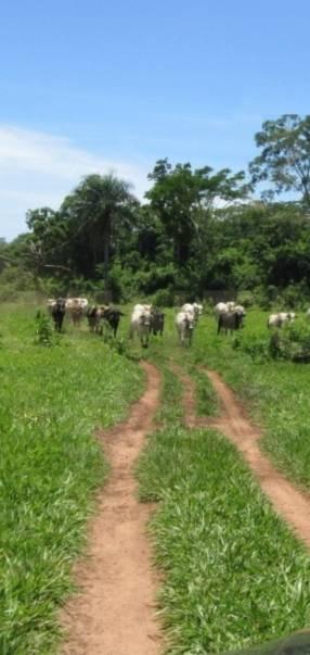 1600 hectáreas en San Pedro