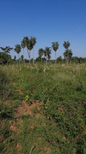 Terreno de 4,5 hectáreas en Caacupé Ypucu