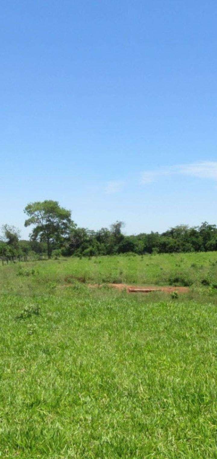 1600 hectáreas en San Pedro - 4