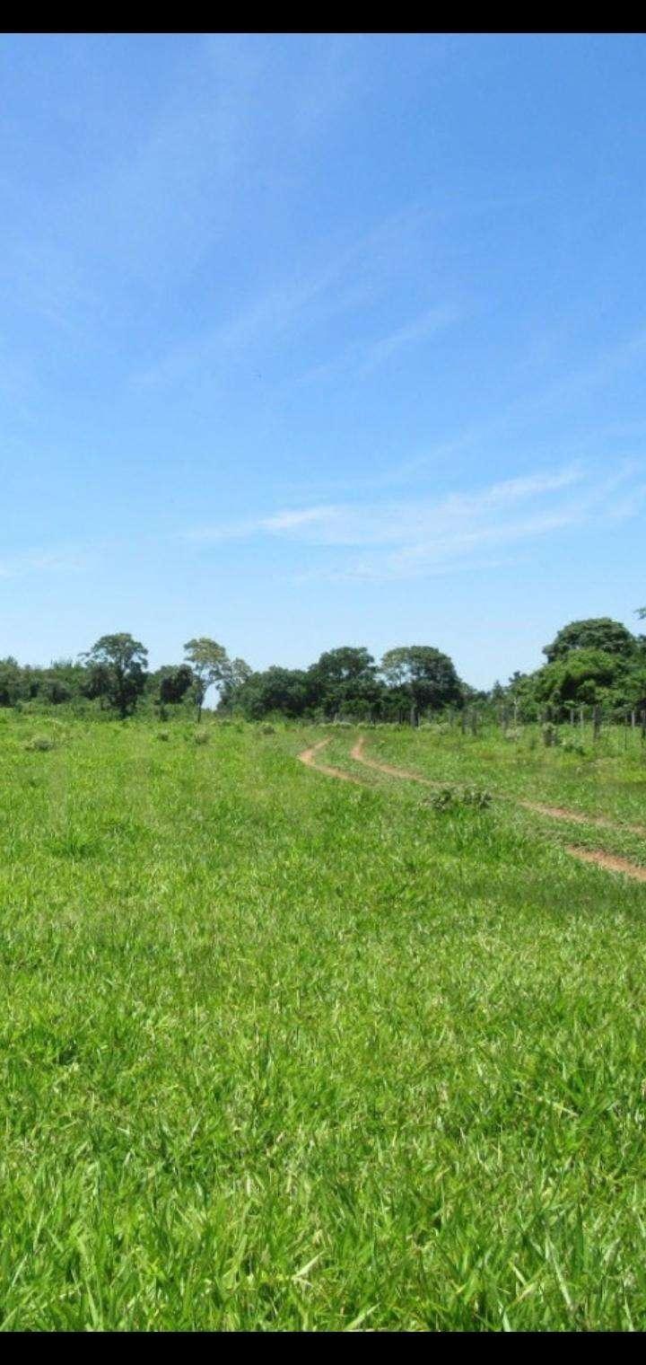 1600 hectáreas en San Pedro - 6