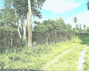 800 hectáreas en Luque Sanber