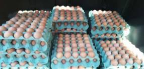 Huevos frescos de granja