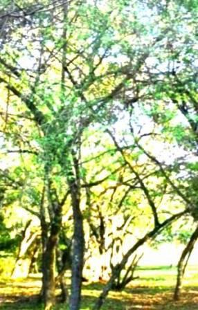 Terreno de 5 hectáreas y media en Benjamín Aceval