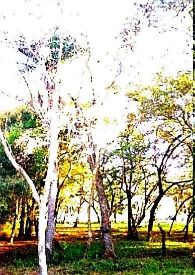 Terreno de 5 hectáreas y media en Benjamín Aceval - 1