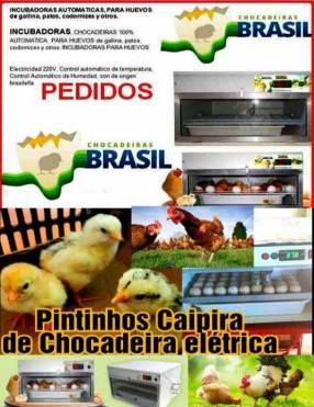 Incubadoras automáticas para huevos de todo tipo