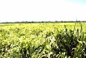 58.000 hectáreas en Alto Paraguay