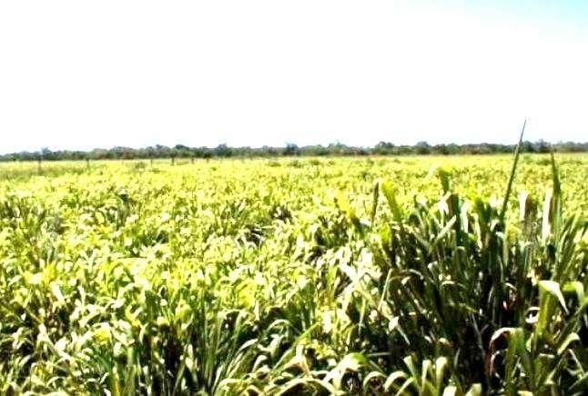 58.000 hectáreas en Alto Paraguay - 0
