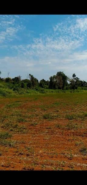 150 hectáreas en Hernandarias