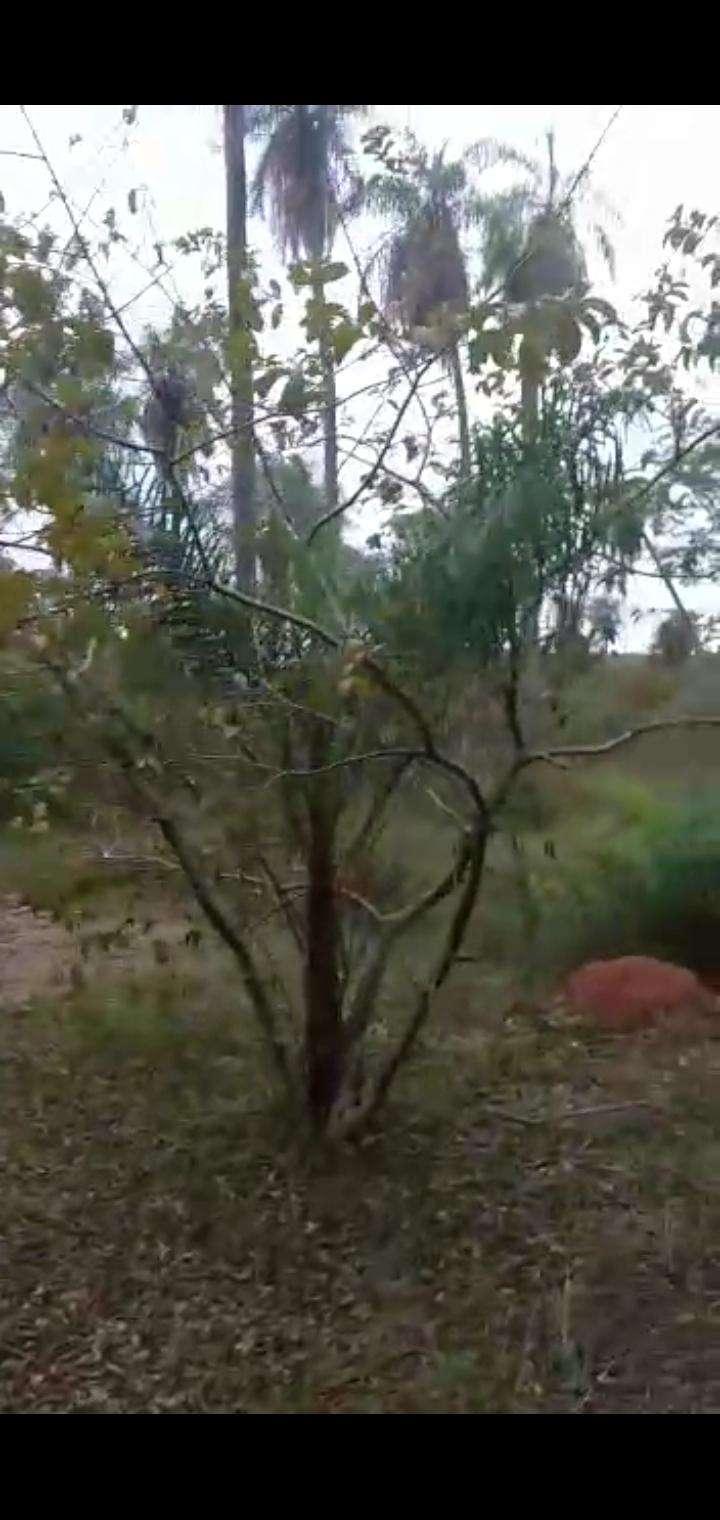 22 hectáreas en Ytu Caacupé - 5