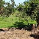 Terreno de 1,5 hectáreas en Capiatá - 2