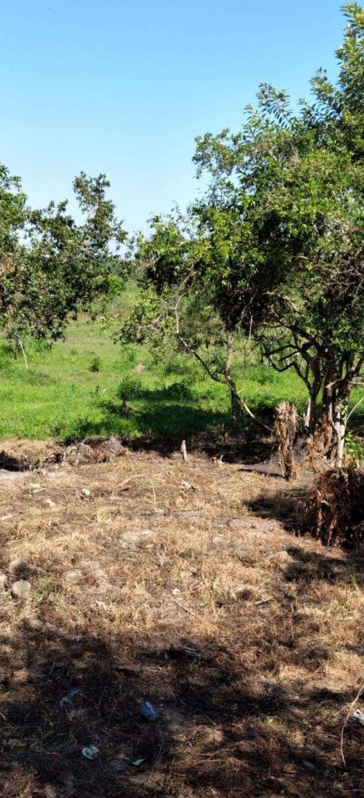 Terreno de 1,5 hectáreas en Capiatá - 7