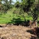 Terreno de 1,5 hectáreas en Capiatá - 8