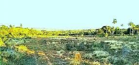 Terreno en Altos de 4 hectáreas