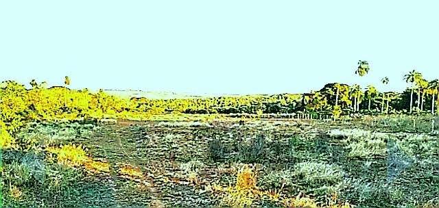 Terreno en Altos de 4 hectáreas - 0