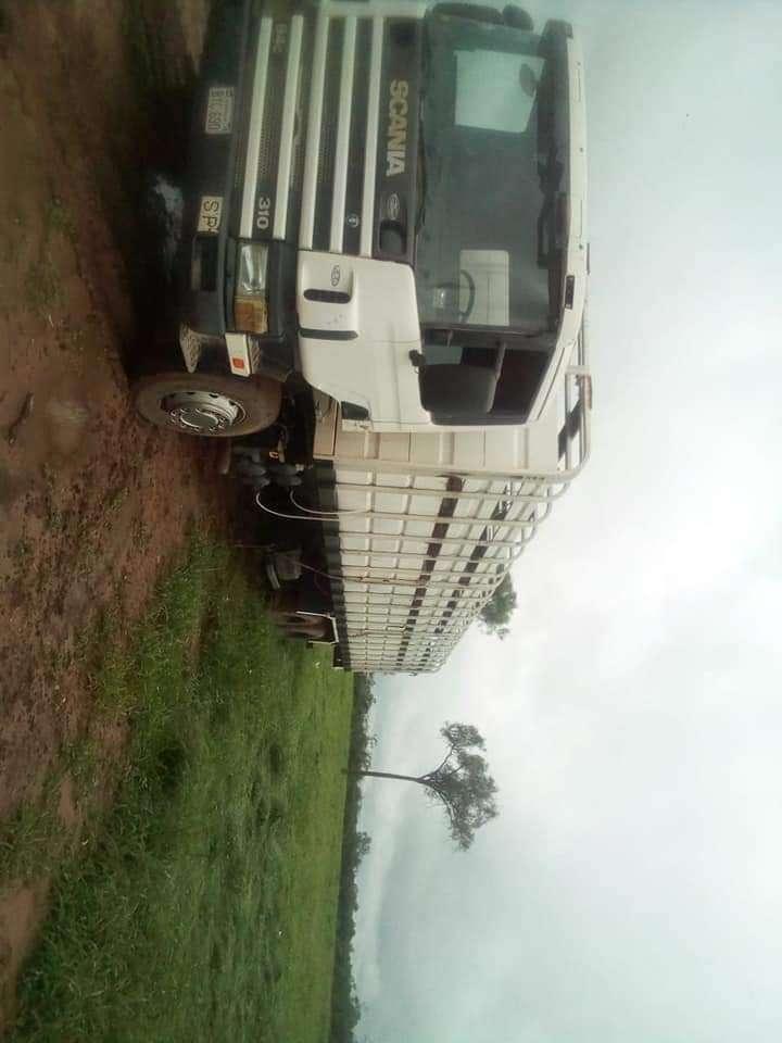 Camión transganado 1999 - 1