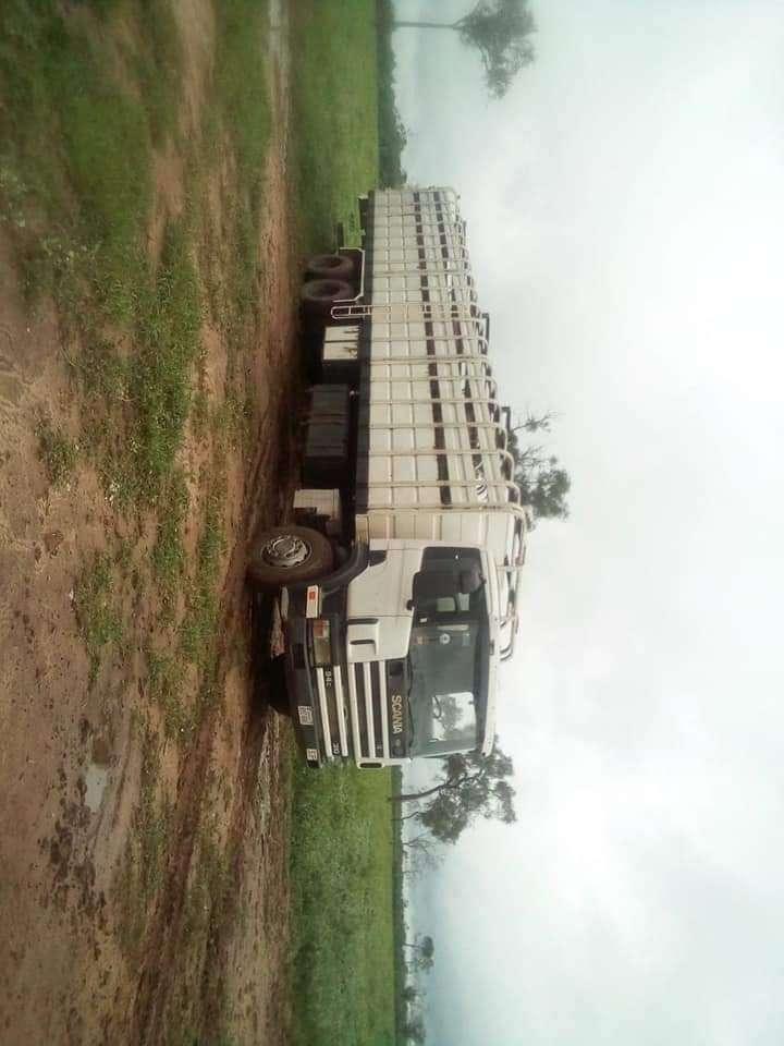 Camión transganado 1999 - 2