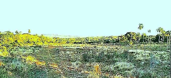 Terreno en Altos de 4 hectáreas - 2