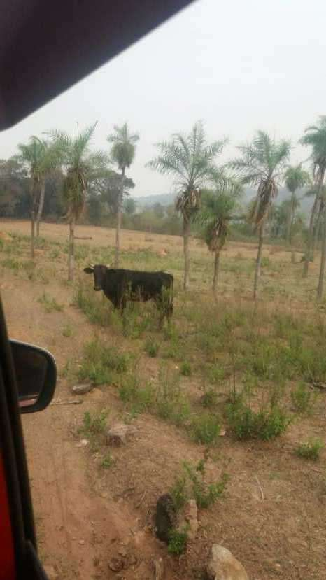 7 hectáreas en Pirayú Cerro Vera a 1000 metros de la ruta principal - 1