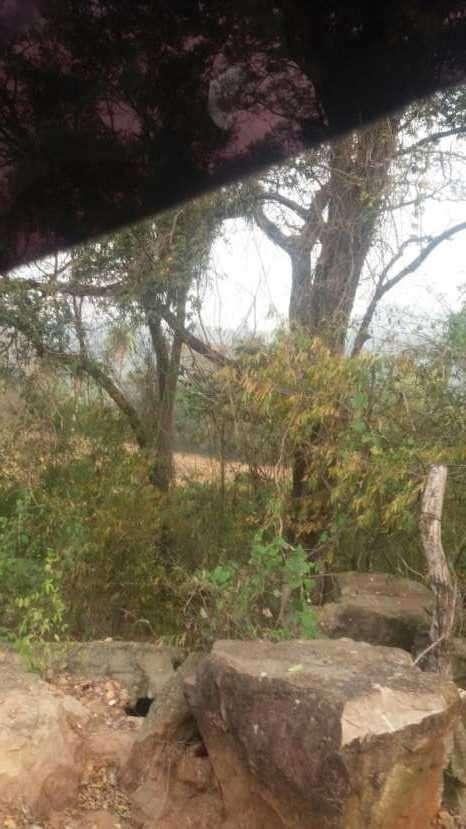 7 hectáreas en Pirayú Cerro Vera a 1000 metros de la ruta principal - 2