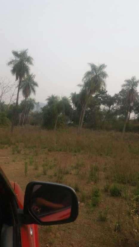 7 hectáreas en Pirayú Cerro Vera a 1000 metros de la ruta principal - 3