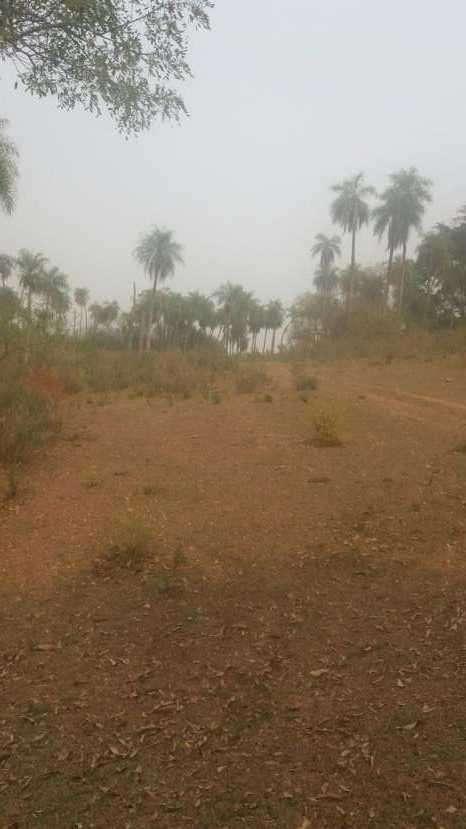 7 hectáreas en Pirayú Cerro Vera a 1000 metros de la ruta principal - 5