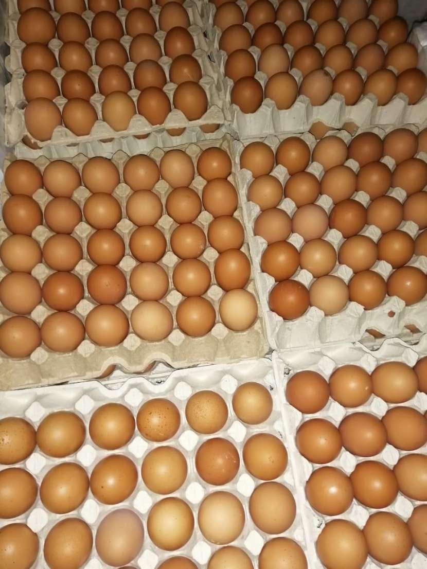 Huevos San Carlos - 1