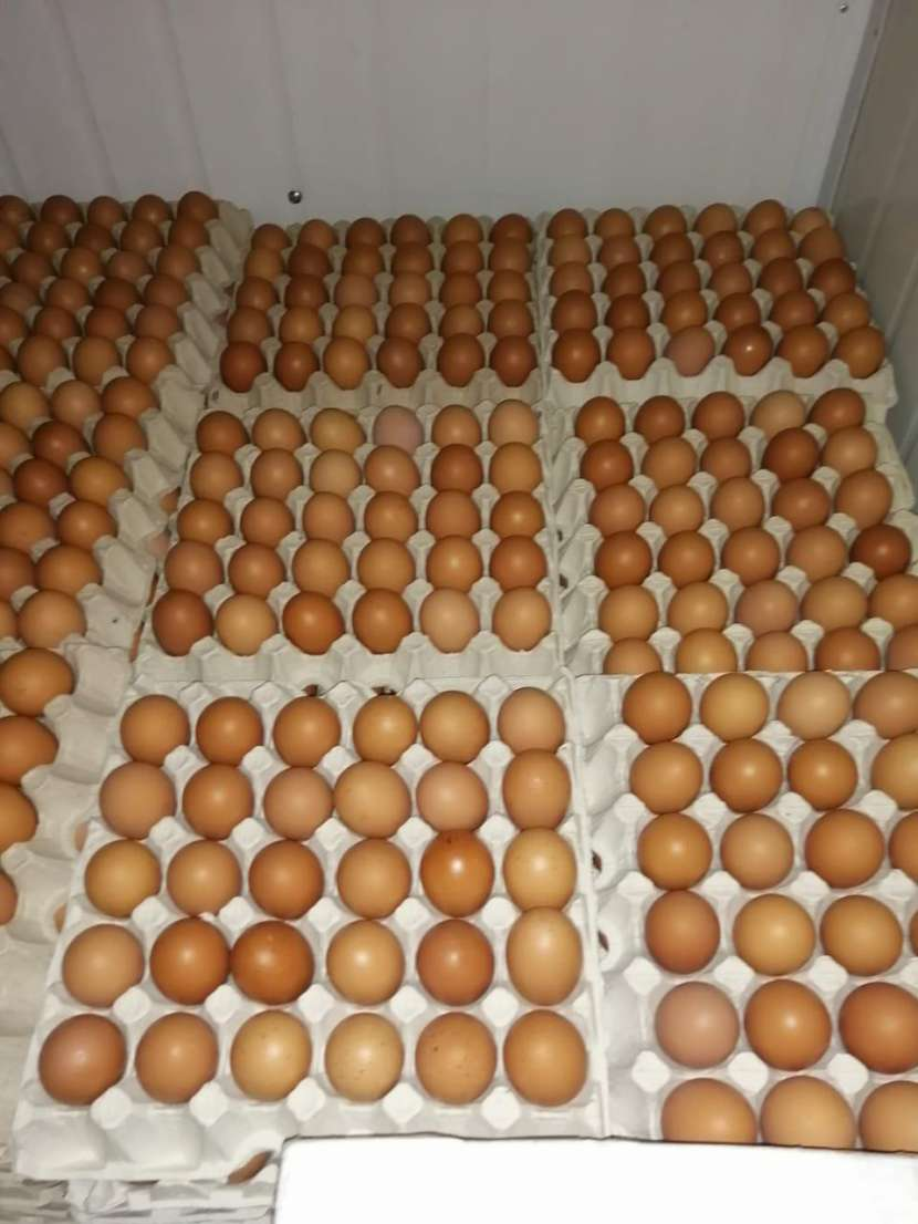 Huevos San Carlos - 2