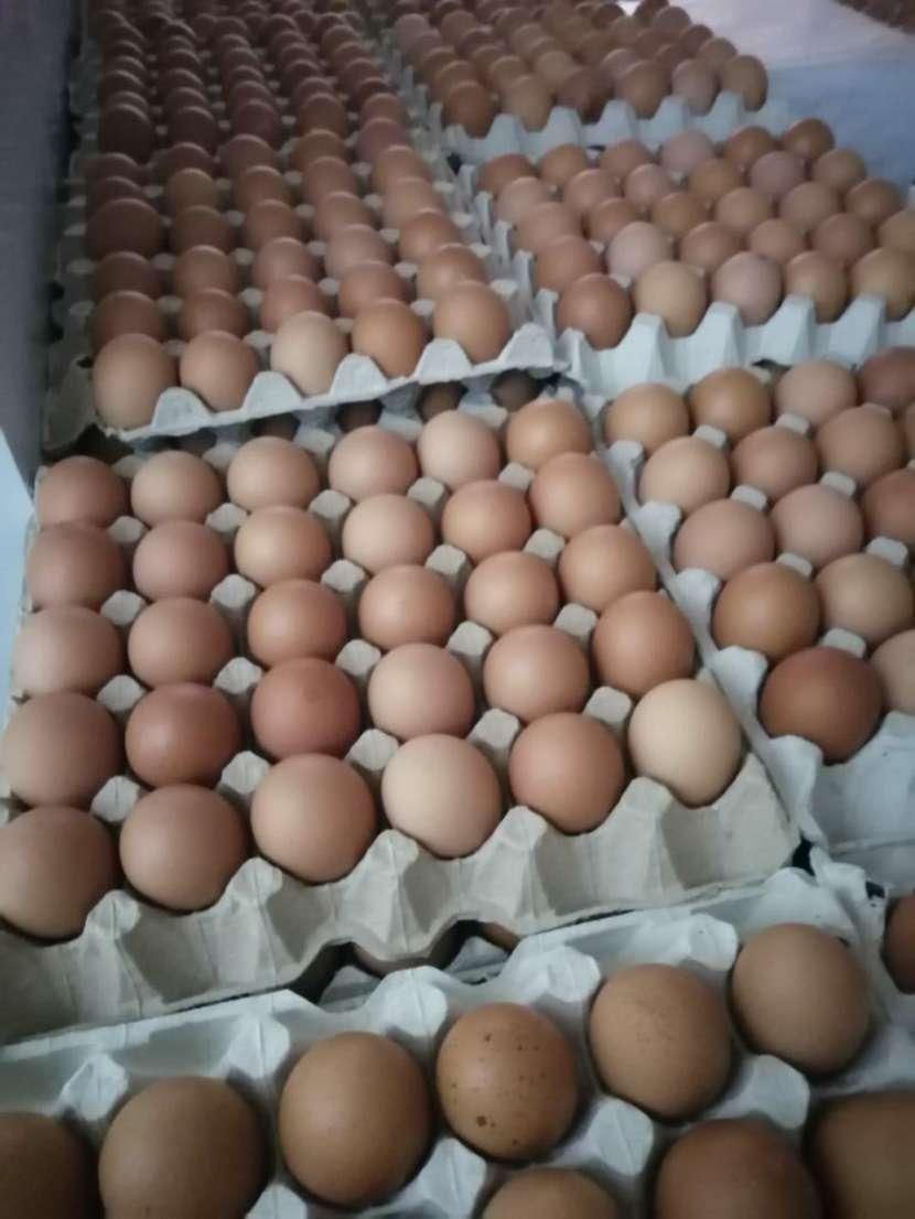 Huevos San Carlos - 3
