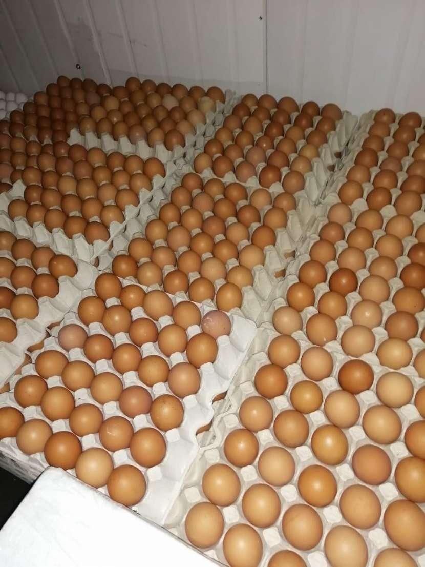 Huevos San Carlos - 4