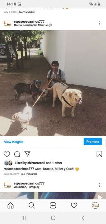 Servicio de paseos caninos a domicilio monchi - 3