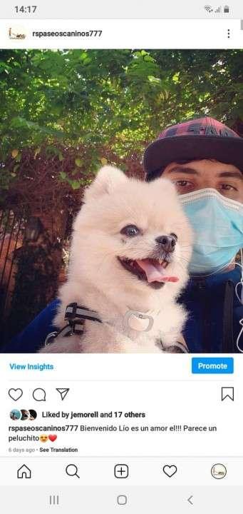 Servicio de paseos caninos a domicilio monchi - 4