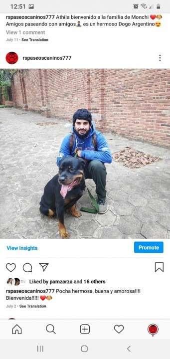 Servicio de paseos caninos a domicilio monchi - 6