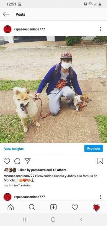 Servicio de paseos caninos a domicilio monchi - 8