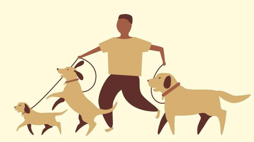 Servicio de paseos caninos a domicilio monchi - 0