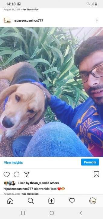 Servicio de paseos caninos a domicilio monchi - 2