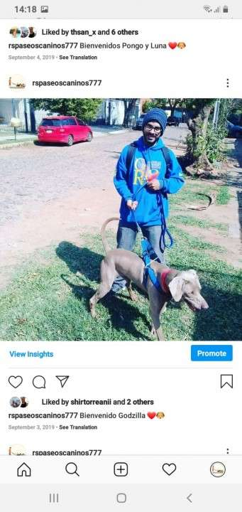 Servicio de paseos caninos a domicilio monchi - 5