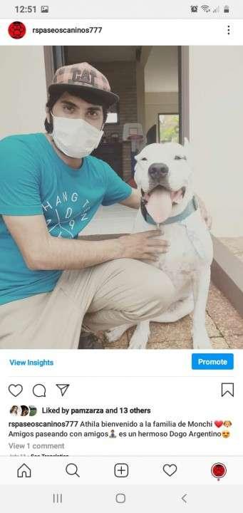 Servicio de paseos caninos a domicilio monchi - 7